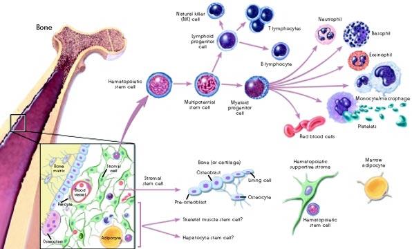 P.R.Pیا پلاسما درمانی یا سلول درمانی 1422281997041